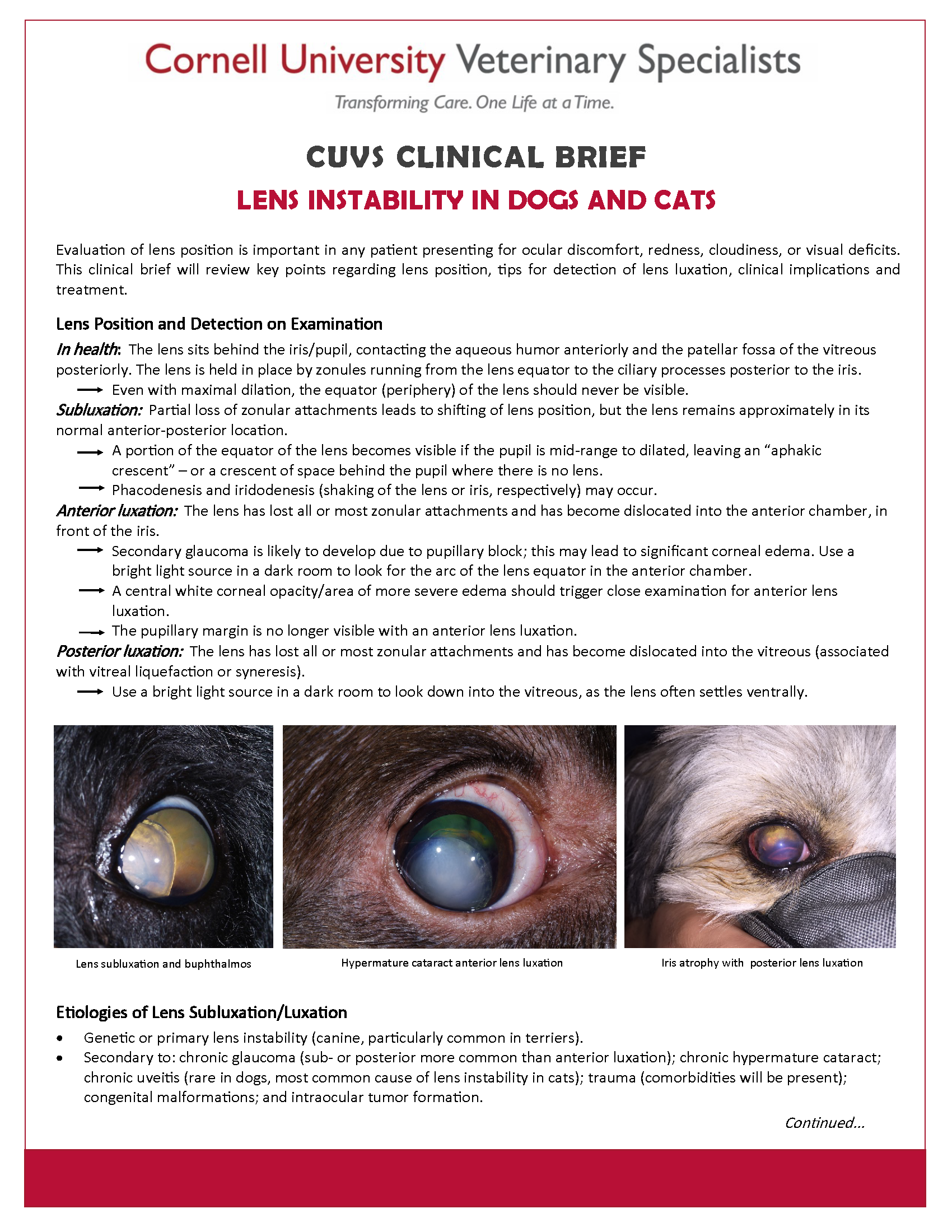 Clinical Brief - Lens Instability in Dogs and Cats