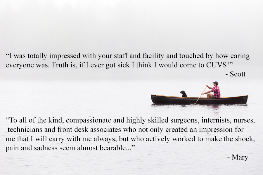 canoe with client quotes